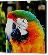 Parrot  Canvas Print by Bruce Kessler