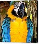 Parrot II Canvas Print by Bruce Kessler
