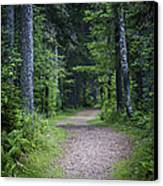 Path In Dark Forest Canvas Print by Elena Elisseeva