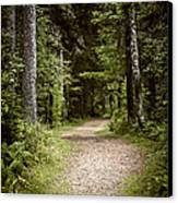 Path In Old Forest Canvas Print
