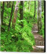 Path In The Forest Canvas Print by Jill Lang