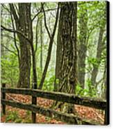 Path Into The Forest Canvas Print by Debra and Dave Vanderlaan