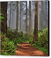 Path Thru The Redwoods Canvas Print