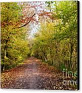 Pathway Through Sunlit Autumn Woodland Trees Canvas Print by Natalie Kinnear
