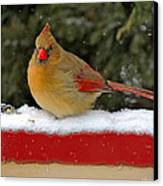 Patriotic Cardinal Canvas Print by Mary Williamson