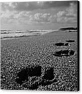 Paw Prints In The Sand Canvas Print