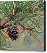 Peaceful Pinecone Canvas Print