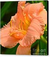 Peach Day Lilly Canvas Print
