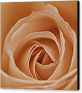 Peach Rose Canvas Print by Lesley Rigg