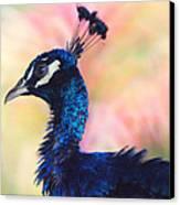 Peacock And Pink Canvas Print by DerekTXFactor Creative