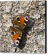Peacock Butterfly Canvas Print by Frits Selier