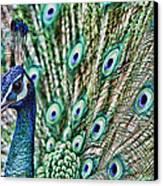 Peacock Canvas Print by Karen Walzer