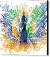 Peacock Splash Canvas Print by Diana Shively