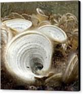 Peacocks Tail Algae Canvas Print by Science Photo Library