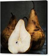 Pear Still Life Canvas Print