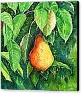 Pear Canvas Print by Zaira Dzhaubaeva