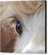 Peek A Boo Alpaca Canvas Print by Helen Carson