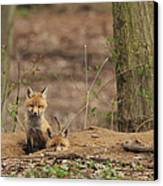 Peeking From The Fox Hole Canvas Print