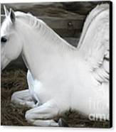 Pegasus Canvas Print by Lynn Jackson