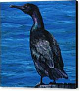 Pelagic Cormorant Canvas Print