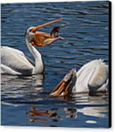 Pelican Fishing Buddies Canvas Print by Kathleen Bishop