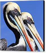 Pelican Perfection Canvas Print by James Brunker