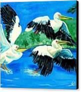 Pelican Trio Canvas Print