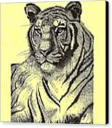 Pen And Ink Drawing Of Royal Tiger Canvas Print by Mario Perez