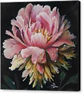 Peony Canvas Print by Lynette Yencho