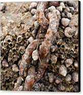 Periwinkle Protection  Canvas Print by Eugene Bergeron