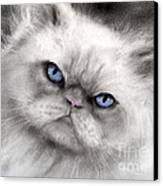 Persian Cat With Blue Eyes Canvas Print