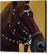 Peruvian Horse Canvas Print by Lisa Bentley
