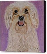 Pet Dog Canvas Print by David Hawkes