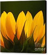Petales De Soleil - A01 Canvas Print by Variance Collections