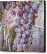 Phil's Grapes Canvas Print