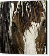 Picasso's Eyes Canvas Print by Carol Walker
