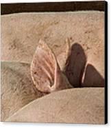 Piglets Napping 2 Canvas Print by Odd Jeppesen