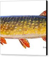 Pike Canvas Print
