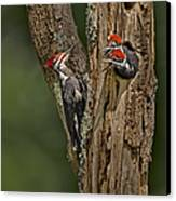 Pilated Woodpecker Family Canvas Print by Susan Candelario