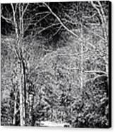 Pine Barrens Path Canvas Print by John Rizzuto