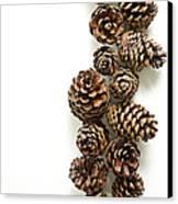 Pine Cones Canvas Print