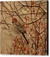 Pine Grosbeak Canvas Print by Tammy  Taylor