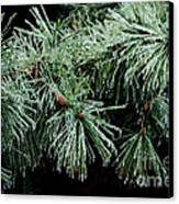Pine Needles In Ice Canvas Print by Betty LaRue
