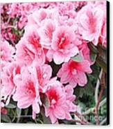 Pink Azalea In Bloom Canvas Print by Halyna  Yarova