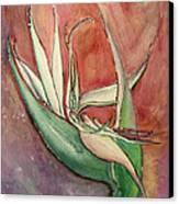 Pink Bird Of Paradise Canvas Print by Anais DelaVega