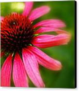 Pink Burst Of Color Canvas Print by Alexandra  Rampolla