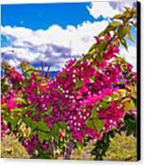 Pink Bush Canvas Print by Lisa Cortez
