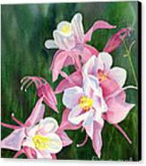 Pink Columbine Blossoms Canvas Print