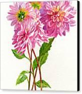 Pink Dahlias Canvas Print by Sharon Freeman