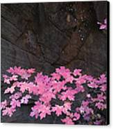 Pink Fall Colors In Sedona Arizona Canvas Print by Dave Dilli
